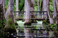 Bridge through the swamp