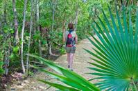 Trail in Queen Elizabeth II Botanic Park, Grand Cayman