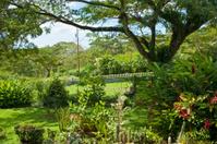 Tropical Garden Series