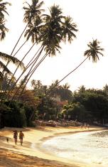 Sri Lanka, Hikkaduwa, beach, coconut trees.