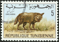 canis aurens, or golden jackal on a Tunisian stamp