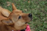 Hopeful dog