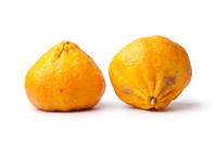 Pair of whole ugli fruit