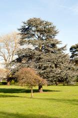 Morning walk, in Chineham Park, Basingstoke