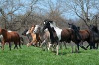 Horses Trot Across a Grassy Hilltop