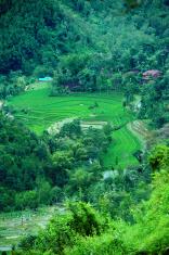 paddy terrace field