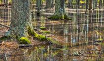 Flooded Coastal Forest