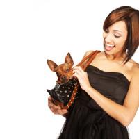 Beautiful laughing woman pets little dog in handbag