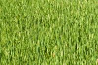 Healthy green crop