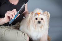Senior woman grooming dog