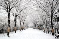 White winter road