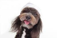 dog with hood