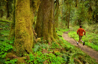 Trail runner in forest
