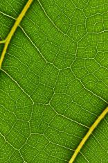 macro of plant leaf