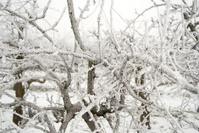 Trees in Winter Landscape
