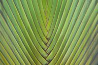 palm plant leaf
