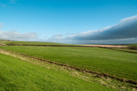 Ayrshire fields