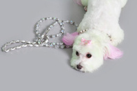 Maltese dog dyed Pink