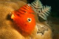 underwater coral tube worm