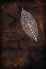 Earthy Leaf
