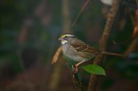 Bird in Bushes