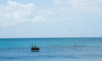 Birds on the Caribbean SEa