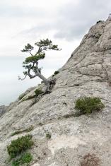 Crimea nature