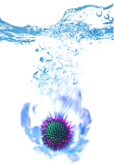 Abstract African Daisy Splash