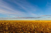 Golden Wheat Fields freshly seeded in the Wheatbelt Region