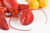 Boiled lobster with lemons