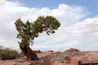 Lone Tree, landscape
