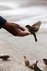 bird feeding hand with wonderful available light