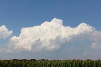 Cumulus over corn