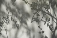 Textured Wall Branch Leaf Shadows