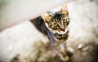Cute Stray Cat