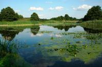Summer at the lakeside