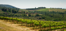 Tuscan Landscape in Chianti Region with Vineyards
