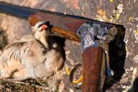Chucker Bird and Shotgun