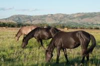 Mares Grazing at the Black Hills Wild Horse Sanctuary