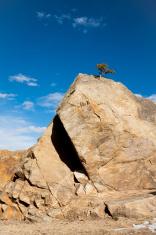 Tree on a Rock