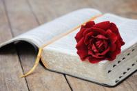 Bible & red rose