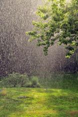 Summer Rain
