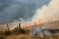 Wildfire in grass