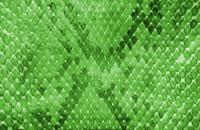 Snake skin green color