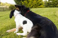 Togetherness-puppy cuddles up to big dog