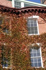 Ivy at Beacon Hill