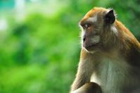 portrait on an ape