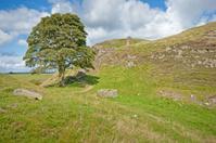 Hadrian's wall Robin Hood tree
