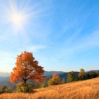 Lonely autumn tree on evening Carpathian mountainside.