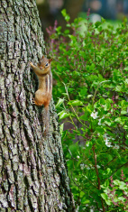 Chipmunk on a tree against green background